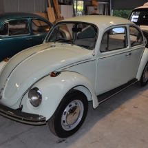 Donna's Beetle